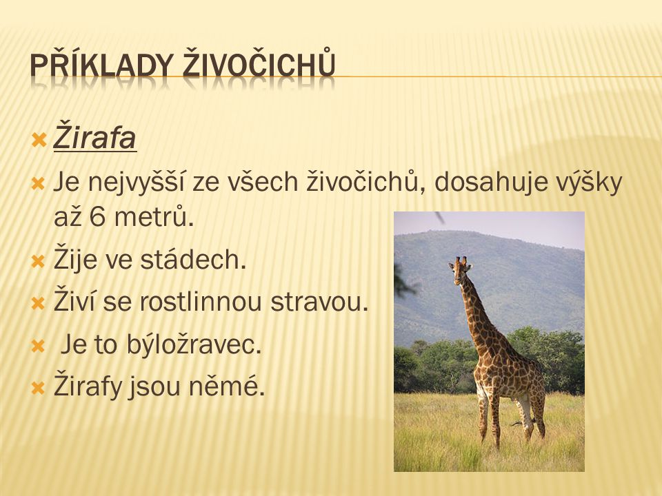  Žirafa  Je nejvyšší ze všech živočichů, dosahuje výšky až 6 metrů.  Žije ve stádech.  Živí se rostlinnou stravou.  Je to býložravec.  Žirafy js