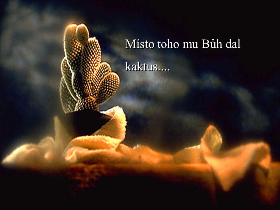 Kdysi dávno jeden muž požádal Boha o květinu........a motýla.