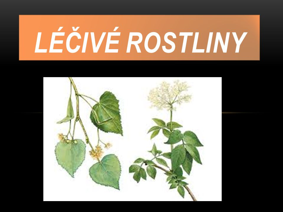 ZAJÍMAVOSTI Je taková rostlina, která svými obsahovanými látkami.