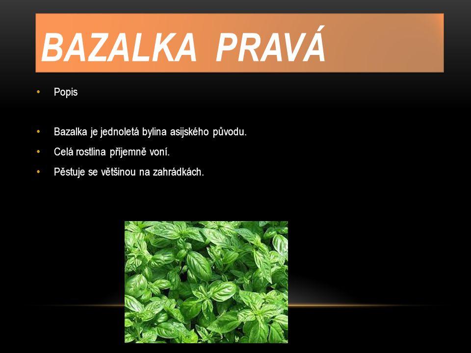 BAZALKA PRAVÁ Popis Bazalka je jednoletá bylina asijského původu. Celá rostlina příjemně voní. Pěstuje se většinou na zahrádkách.