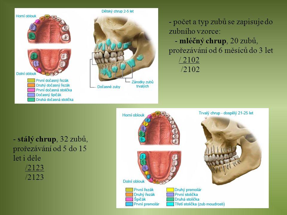 - počet a typ zubů se zapisuje do zubního vzorce: - mléčný chrup, 20 zubů, prořezávání od 6 měsíců do 3 let / 2102 - stálý chrup, 32 zubů, prořezávání