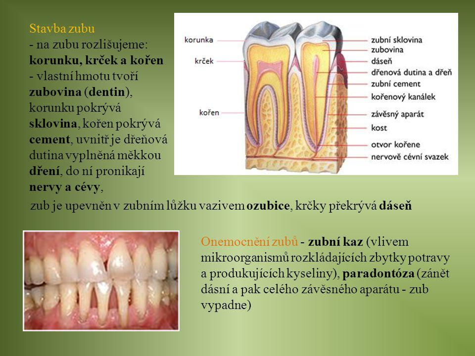 Stavba zubu - na zubu rozlišujeme: korunku, krček a kořen - vlastní hmotu tvoří zubovina (dentin), korunku pokrývá sklovina, kořen pokrývá cement, uvn