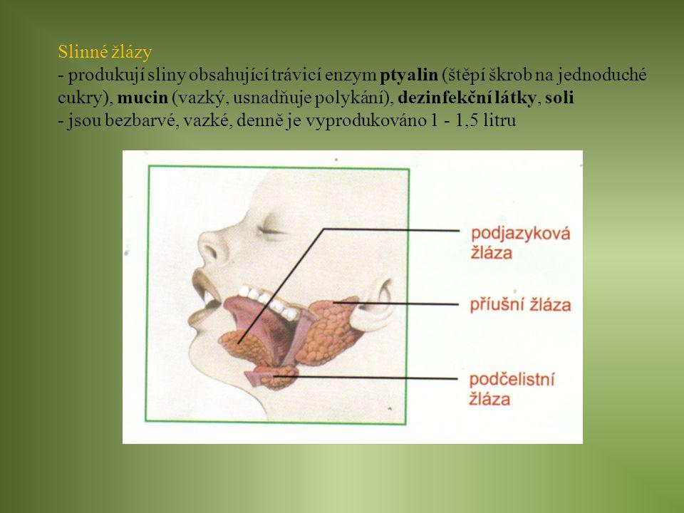 Slinné žlázy - produkují sliny obsahující trávicí enzym ptyalin (štěpí škrob na jednoduché cukry), mucin (vazký, usnadňuje polykání), dezinfekční látk