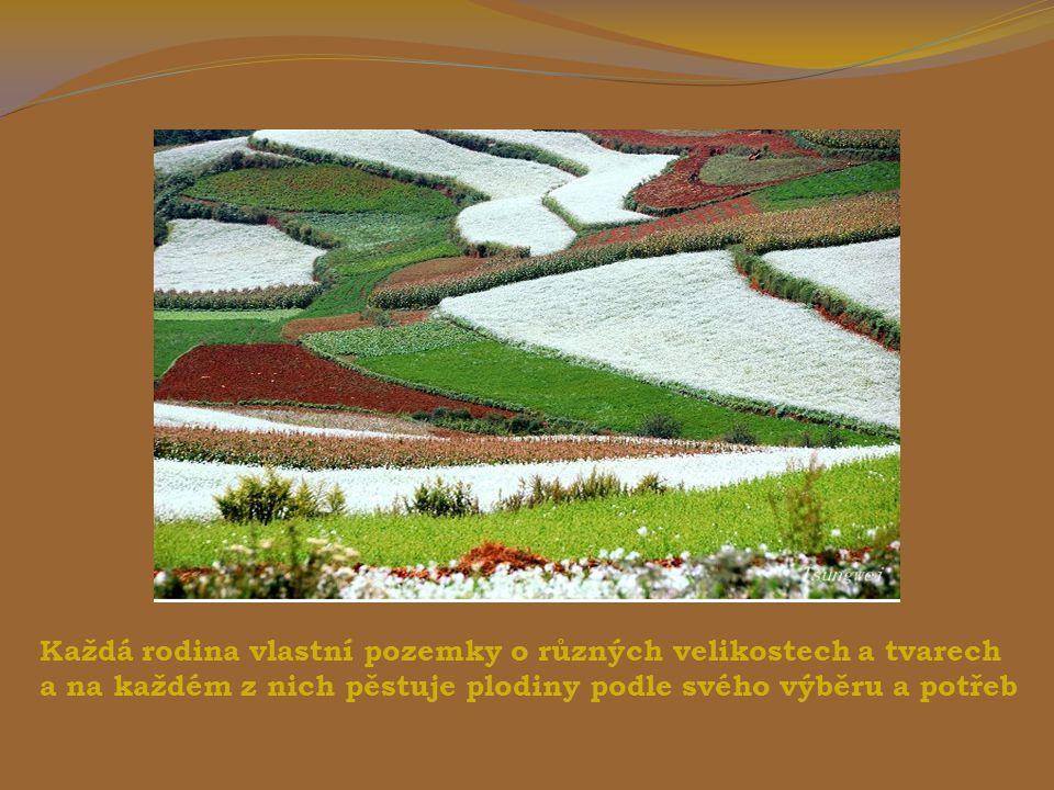 V červené zemi se pěstují brambory, oves a kukuřice.