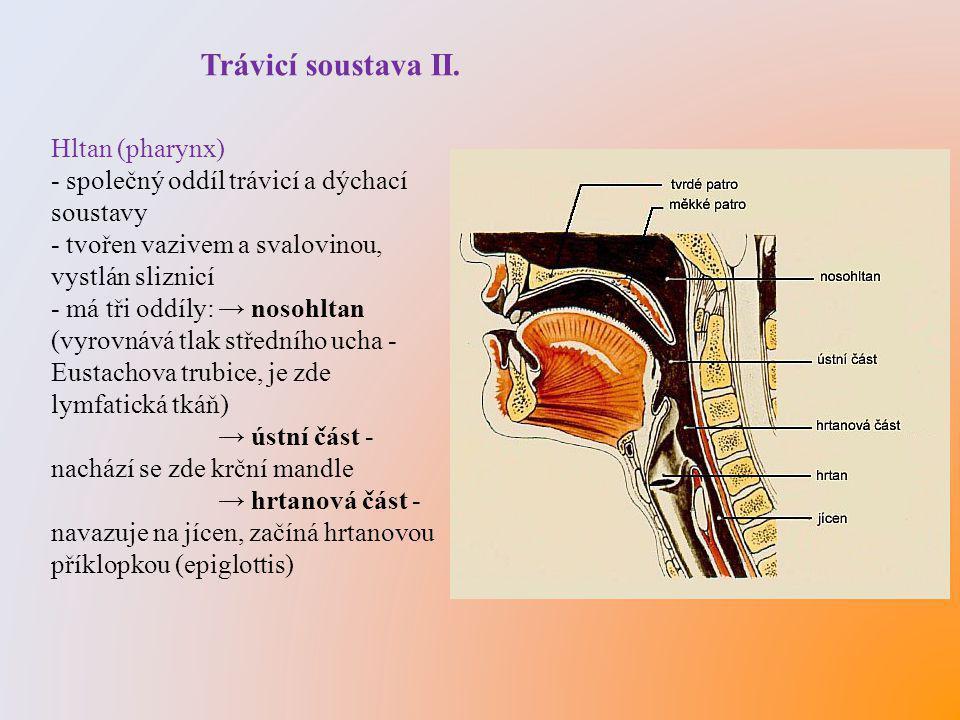 Trávicí soustava II. Hltan (pharynx) - společný oddíl trávicí a dýchací soustavy - tvořen vazivem a svalovinou, vystlán sliznicí - má tři oddíly: → no