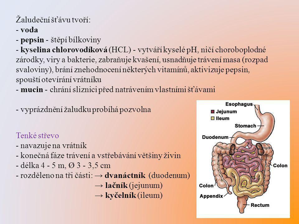 Žaludeční šťávu tvoří: - voda - pepsin - štěpí bílkoviny - kyselina chlorovodíková (HCL) - vytváří kyselé pH, ničí choroboplodné zárodky, viry a bakte