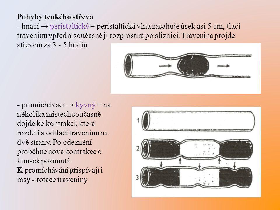 Pohyby tenkého střeva - hnací → peristaltický = peristaltická vlna zasahuje úsek asi 5 cm, tlačí tráveninu vpřed a současně ji rozprostírá po sliznici