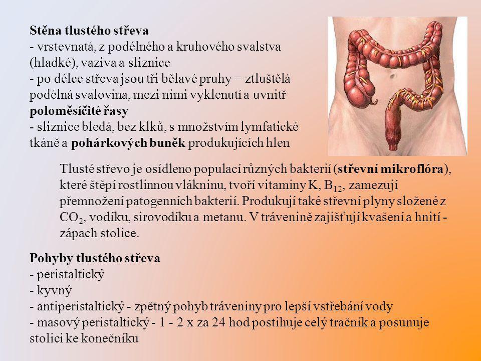 Tlusté střevo je osídleno populací různých bakterií (střevní mikroflóra), které štěpí rostlinnou vlákninu, tvoří vitaminy K, B 12, zamezují přemnožení