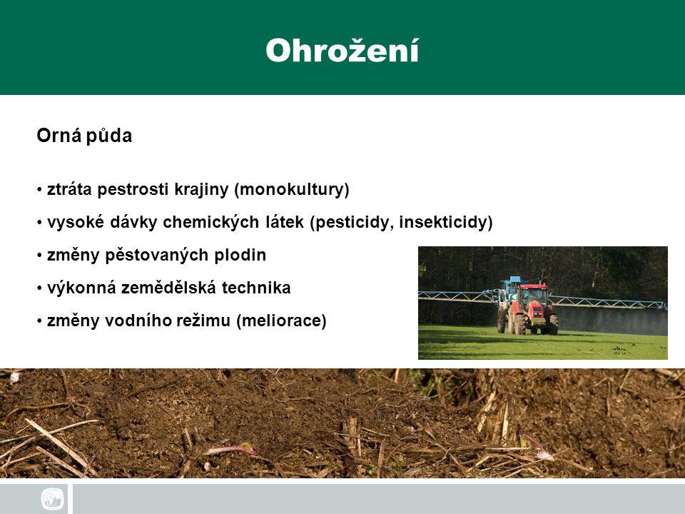 Ohrožení Orná půda ztráta pestrosti krajiny (monokultury) vysoké dávky chemických látek (pesticidy, insekticidy) změny pěstovaných plodin výkonná země