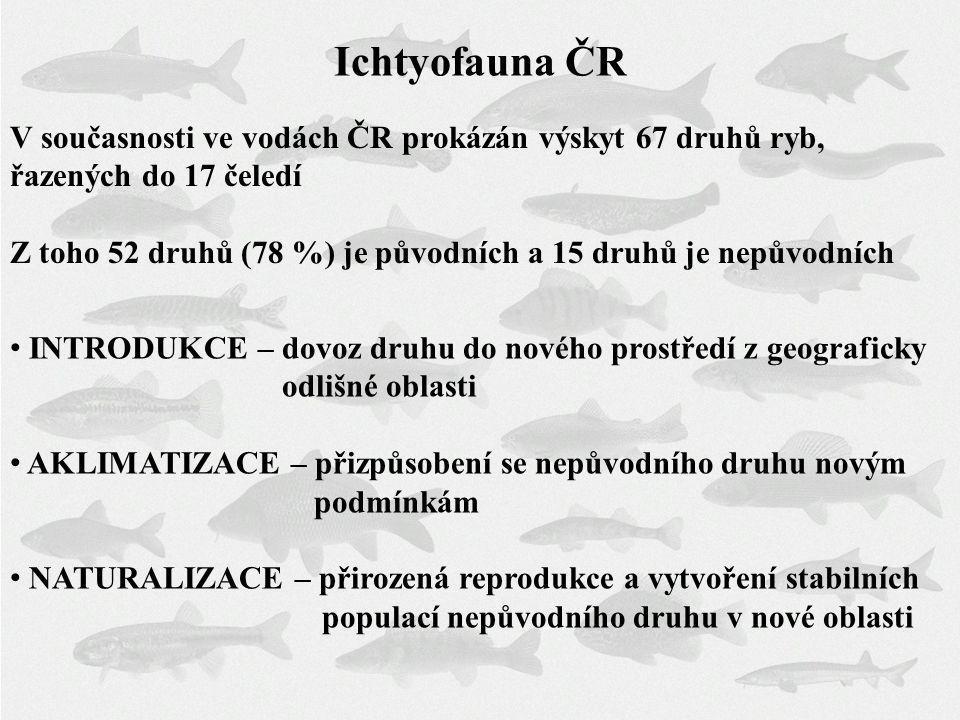 Ichtyofauna ČR V současnosti ve vodách ČR prokázán výskyt 67 druhů ryb, řazených do 17 čeledí Z toho 52 druhů (78 %) je původních a 15 druhů je nepůvo