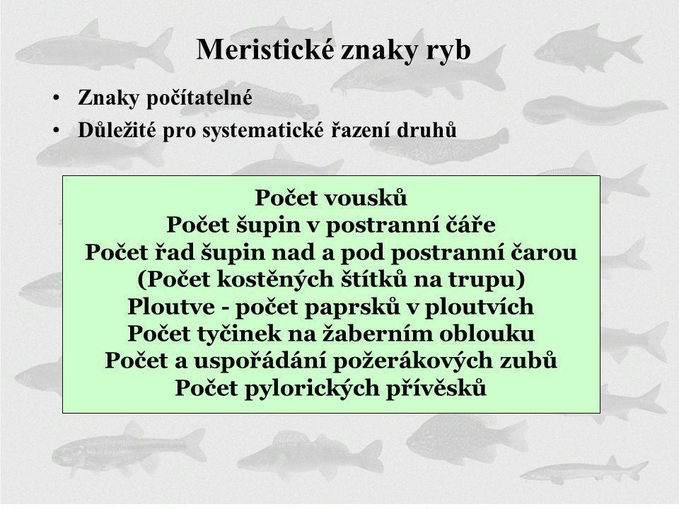 Meristické znaky ryb Znaky počítatelné Důležité pro systematické řazení druhů Počet vousků Počet šupin v postranní čáře Počet řad šupin nad a pod post