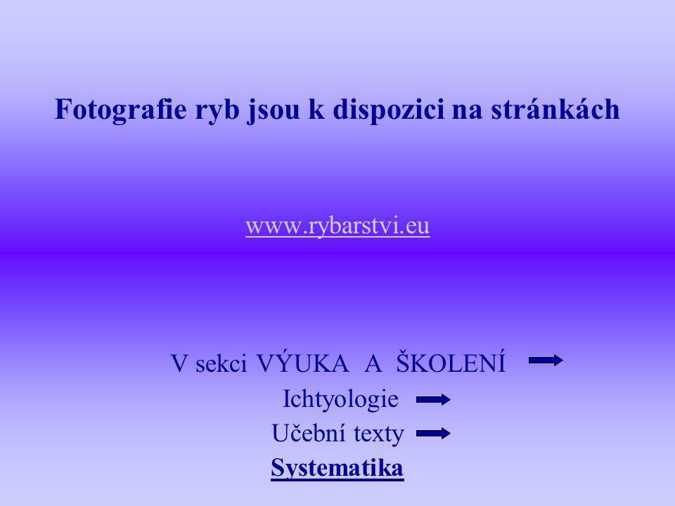 Fotografie ryb jsou k dispozici na stránkách www.rybarstvi.eu V sekci VÝUKA A ŠKOLENÍ Ichtyologie Učební texty Systematika