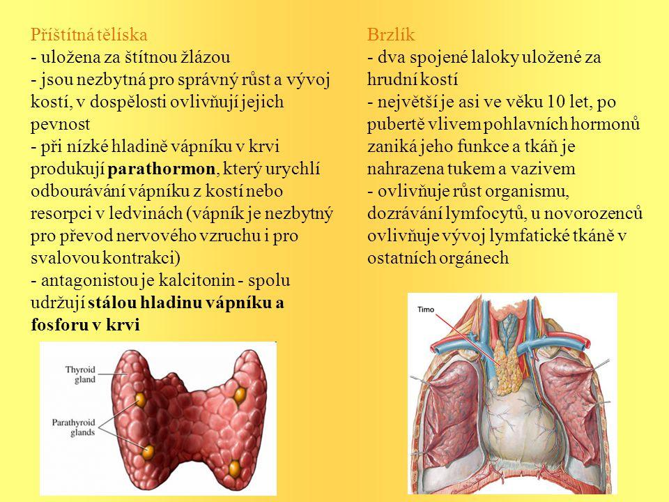 Příštítná tělíska - uložena za štítnou žlázou - jsou nezbytná pro správný růst a vývoj kostí, v dospělosti ovlivňují jejich pevnost - při nízké hladině vápníku v krvi produkují parathormon, který urychlí odbourávání vápníku z kostí nebo resorpci v ledvinách (vápník je nezbytný pro převod nervového vzruchu i pro svalovou kontrakci) - antagonistou je kalcitonin - spolu udržují stálou hladinu vápníku a fosforu v krvi Brzlík - dva spojené laloky uložené za hrudní kostí - největší je asi ve věku 10 let, po pubertě vlivem pohlavních hormonů zaniká jeho funkce a tkáň je nahrazena tukem a vazivem - ovlivňuje růst organismu, dozrávání lymfocytů, u novorozenců ovlivňuje vývoj lymfatické tkáně v ostatních orgánech