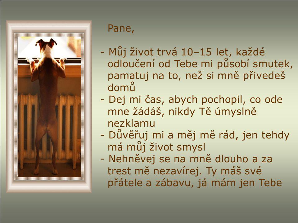 Pane, - Můj život trvá 10–15 let, každé odloučení od Tebe mi působí smutek, pamatuj na to, než si mně přivedeš domů - Dej mi čas, abych pochopil, co ode mne žádáš, nikdy Tě úmyslně nezklamu - Důvěřuj mi a měj mě rád, jen tehdy má můj život smysl - Nehněvej se na mně dlouho a za trest mě nezavírej.