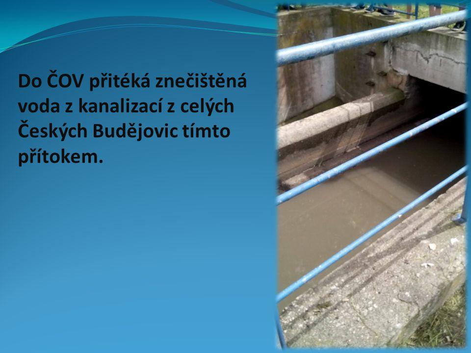 Do ČOV přitéká znečištěná voda z kanalizací z celých Českých Budějovic tímto přítokem.