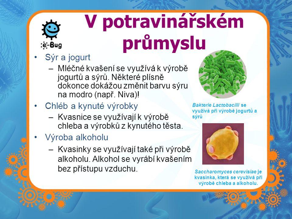 V potravinářském průmyslu Sýr a jogurt –Mléčné kvašení se využívá k výrobě jogurtů a sýrů. Některé plísně dokonce dokážou změnit barvu sýru na modro (