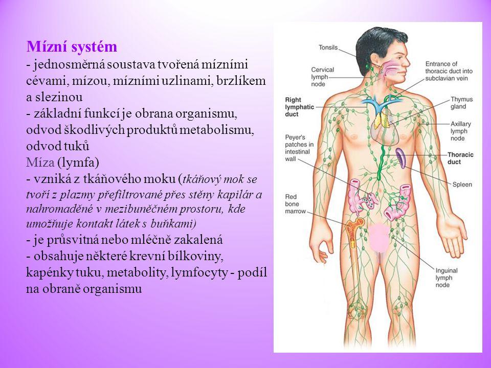 Mízní systém - jednosměrná soustava tvořená mízními cévami, mízou, mízními uzlinami, brzlíkem a slezinou - základní funkcí je obrana organismu, odvod