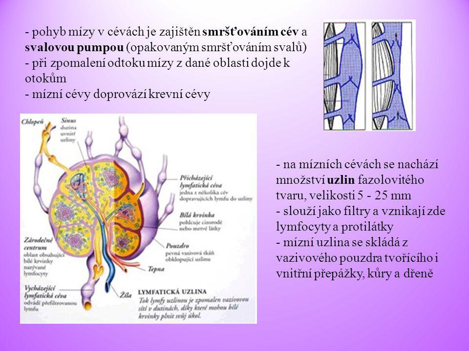 - pohyb mízy v cévách je zajištěn smršťováním cév a svalovou pumpou (opakovaným smršťováním svalů) - při zpomalení odtoku mízy z dané oblasti dojde k