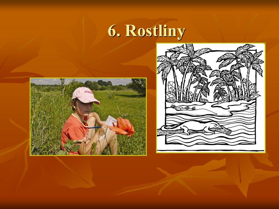 6. Rostliny