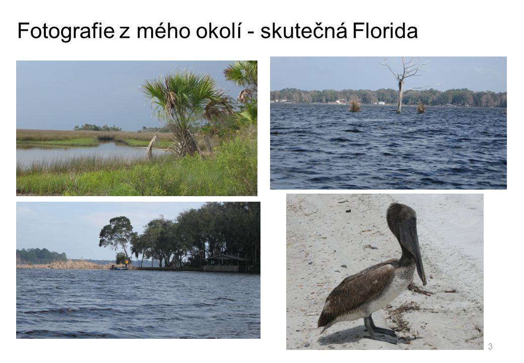 Fotografie z mého okolí - skutečná Florida 3
