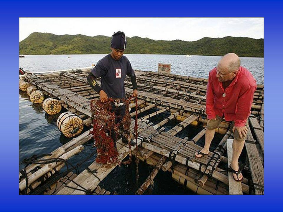 Perlotvorky ale musí být ve svém původním prostředí – v moři