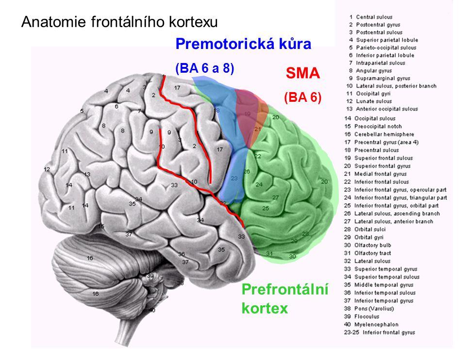 Anatomie frontálního kortexu Prefrontální kortex Premotorická kůra (BA 6 a 8) SMA (BA 6)