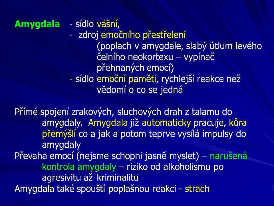 Amygdala - sídlo vášní, - zdroj emočního přestřelení (poplach v amygdale, slabý útlum levého čelního neokortexu – vypínač přehnaných emocí) - sídlo emoční paměti, rychlejší reakce než vědomí o co se jedná Přímé spojení zrakových, sluchových drah z talamu do amygdaly.