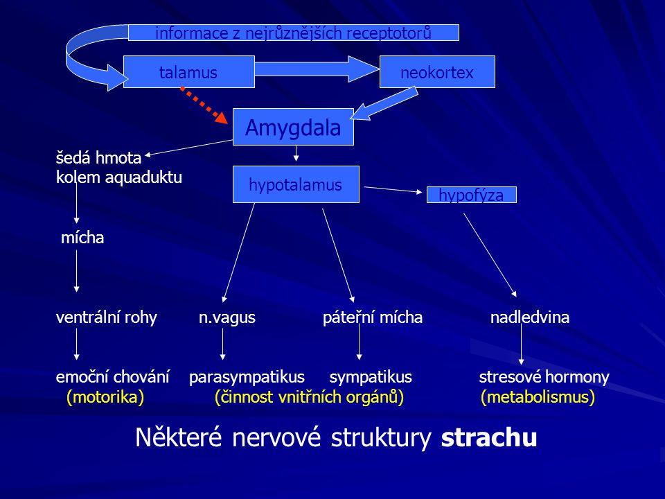 šedá hmota kolem aquaduktu mícha ventrální rohy n.vagus páteřní mícha nadledvina emoční chování parasympatikus sympatikus stresové hormony (motorika) (činnost vnitřních orgánů) (metabolismus) Amygdala hypotalamus hypofýza talamusneokortex Některé nervové struktury strachu informace z nejrůznějších receptotorů