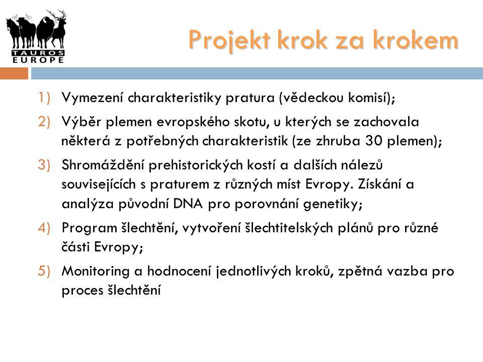 Projekt krok za krokem 1)Vymezení charakteristiky pratura (vědeckou komisí); 2)Výběr plemen evropského skotu, u kterých se zachovala některá z potřebn