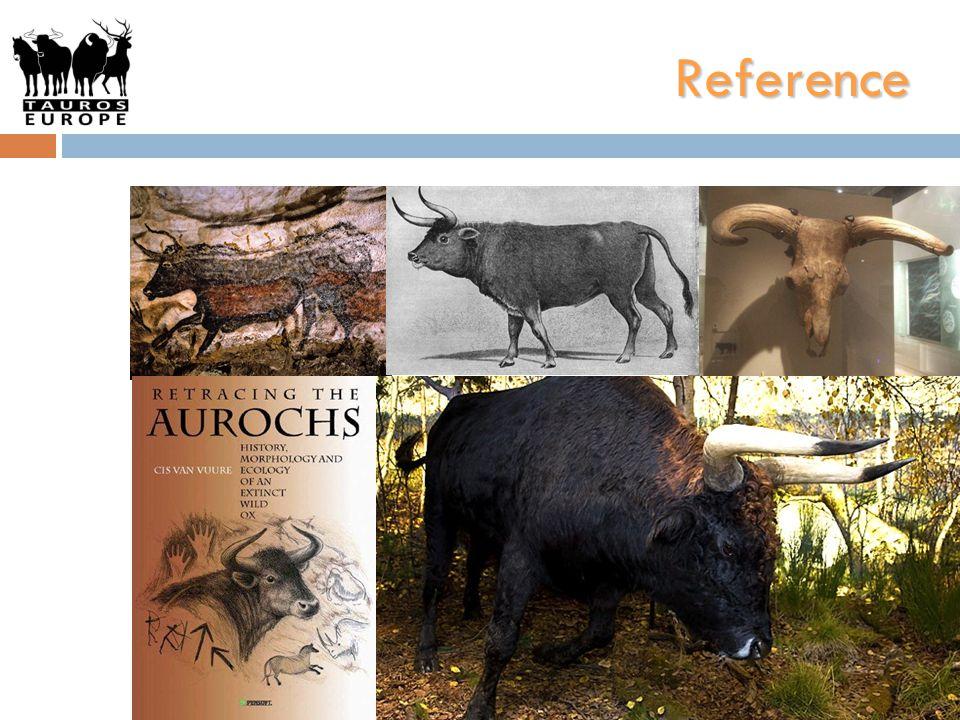 Projekt krok za krokem 1)Vymezení charakteristiky pratura (vědeckou komisí); 2)Výběr plemen evropského skotu, u kterých se zachovala některá z potřebných charakteristik (ze zhruba 30 plemen); 3)Shromáždění prehistorických kostí a dalších nálezů souvisejících s praturem z různých míst Evropy.