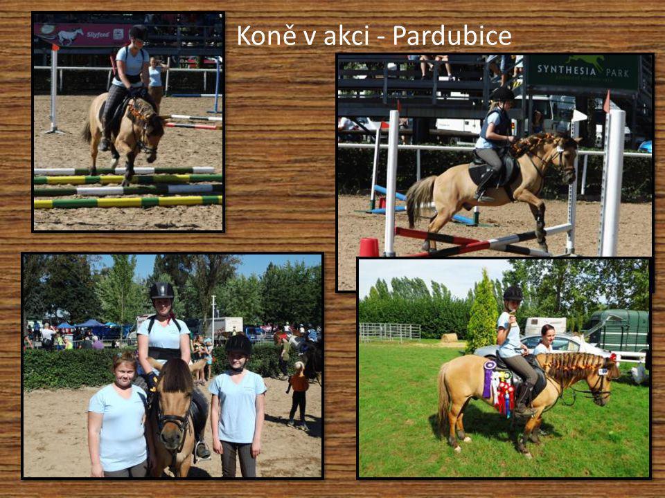 Koně v akci - Pardubice