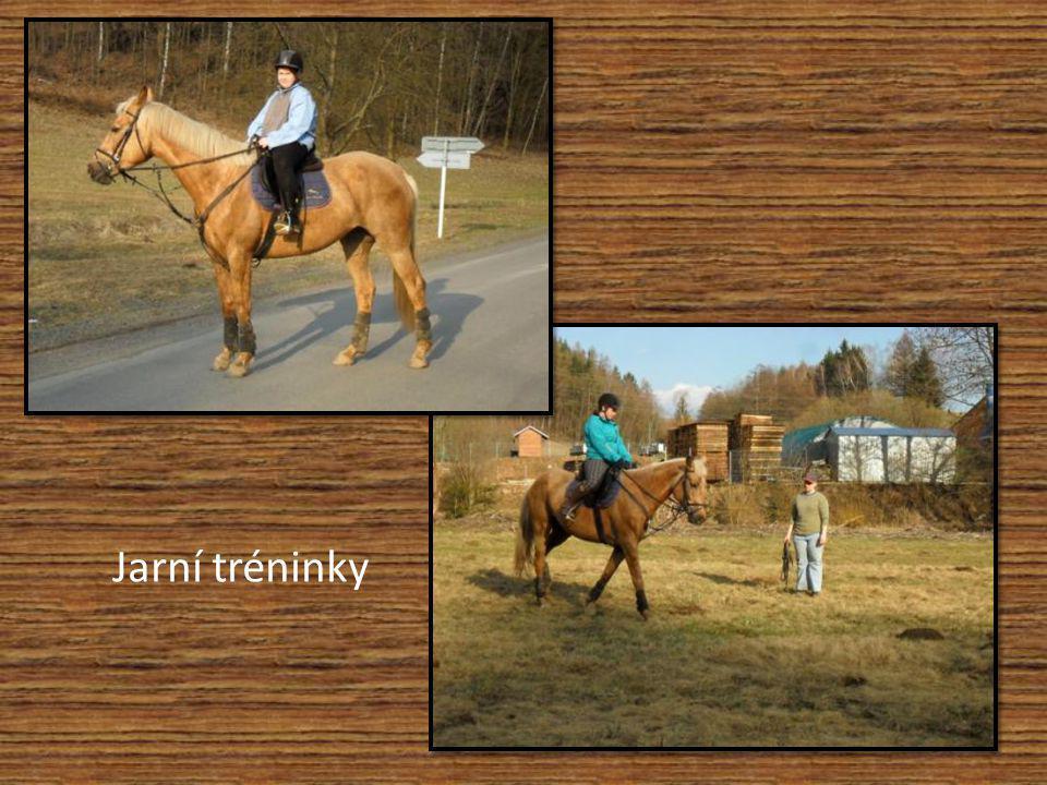 Skoková příprava mladého koně