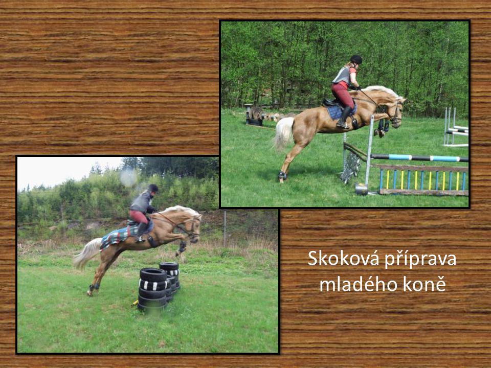 Koně v akci – ukázky horsemanshipu