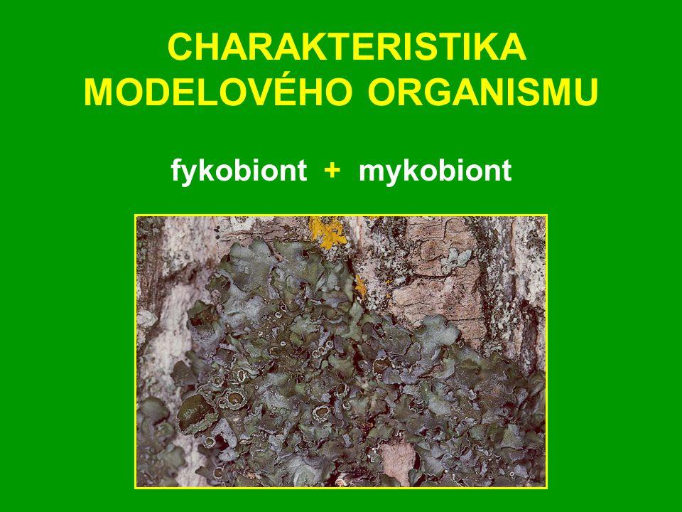 CHARAKTERISTIKA MODELOVÉHO ORGANISMU fykobiont + mykobiont