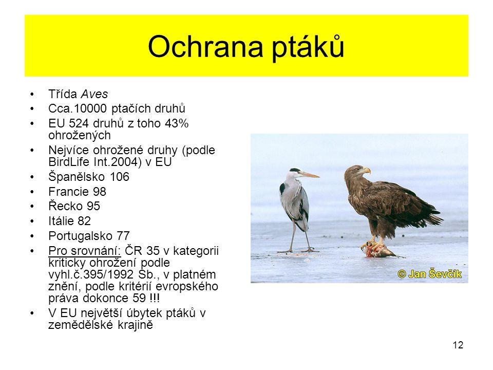 12 Ochrana ptáků Třída Aves Cca.10000 ptačích druhů EU 524 druhů z toho 43% ohrožených Nejvíce ohrožené druhy (podle BirdLife Int.2004) v EU Španělsko
