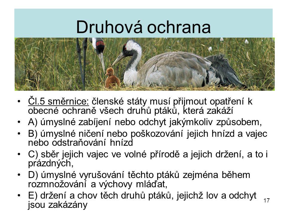 17 Druhová ochrana Čl.5 směrnice: členské státy musí přijmout opatření k obecné ochraně všech druhů ptáků, která zakáží A) úmyslné zabíjení nebo odchy