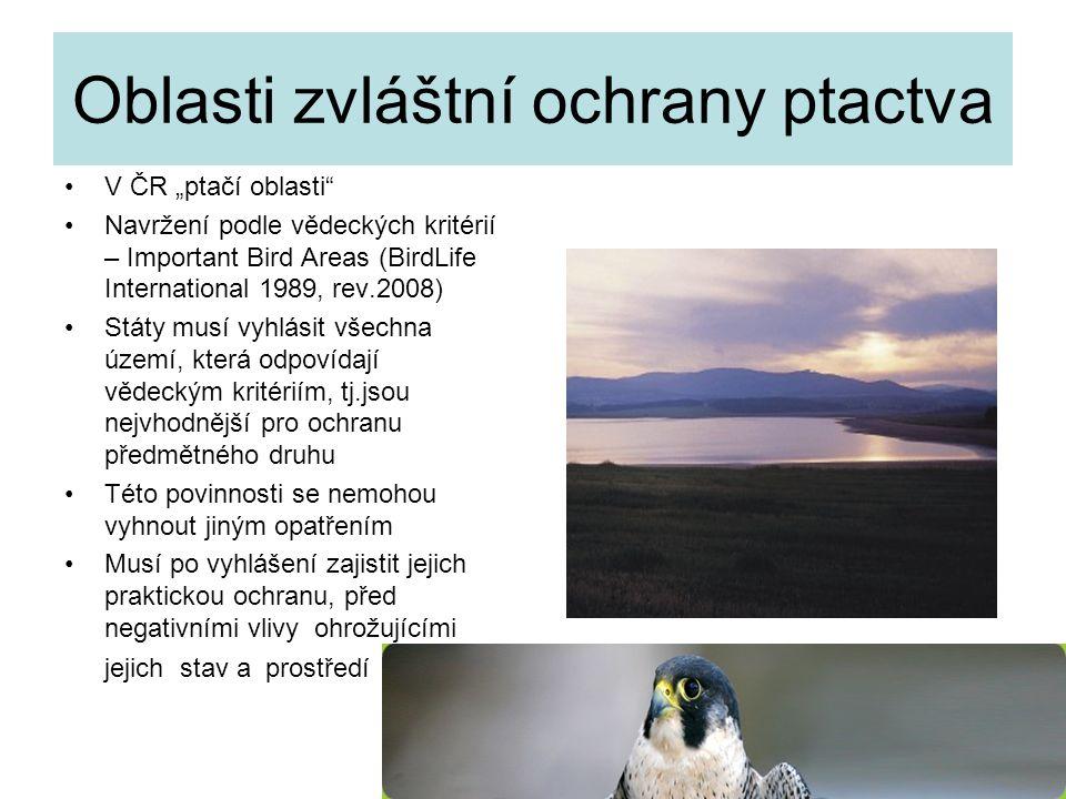 """31 Oblasti zvláštní ochrany ptactva V ČR """"ptačí oblasti"""" Navržení podle vědeckých kritérií – Important Bird Areas (BirdLife International 1989, rev.20"""