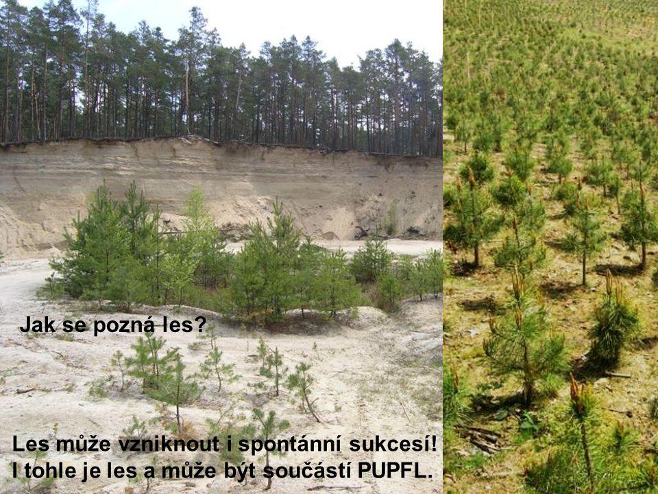 Les může vzniknout i spontánní sukcesí! I tohle je les a může být součástí PUPFL. Jak se pozná les?