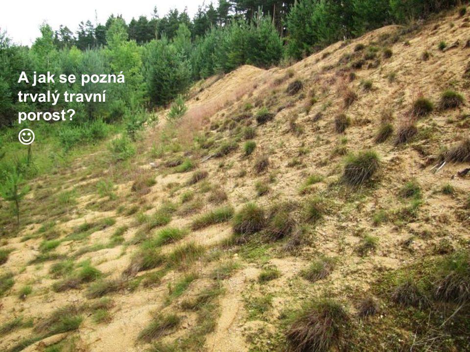 A jak se pozná trvalý travní porost?