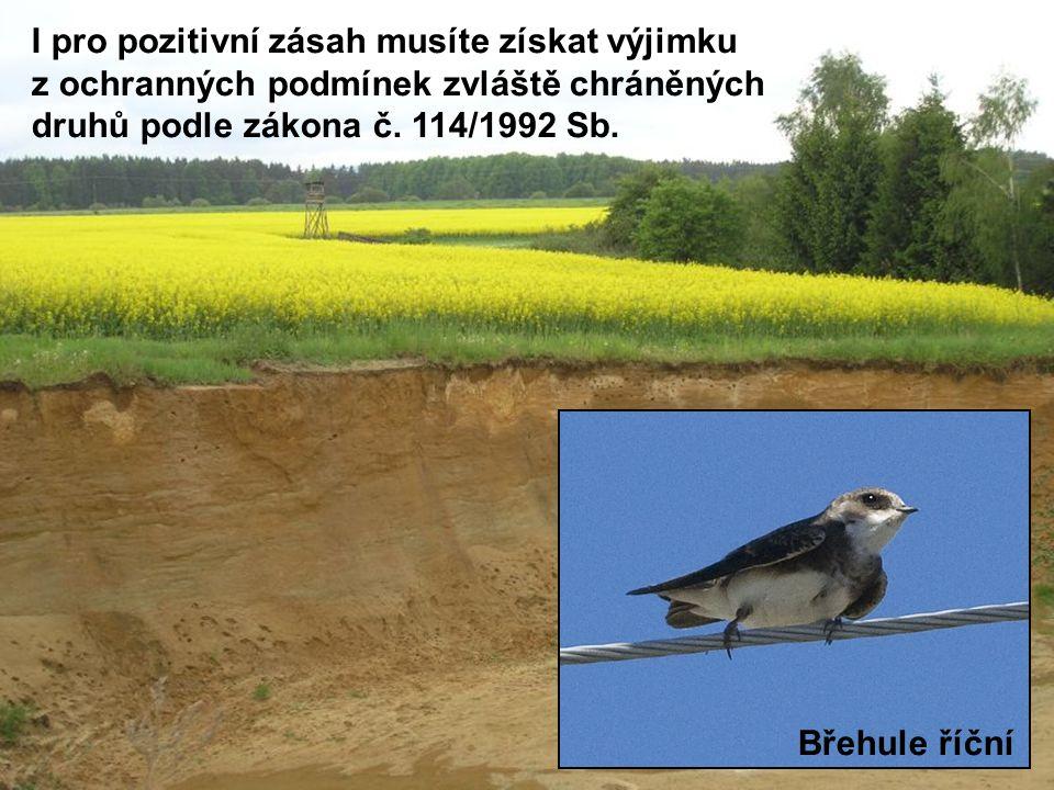 I pro pozitivní zásah musíte získat výjimku z ochranných podmínek zvláště chráněných druhů podle zákona č. 114/1992 Sb.