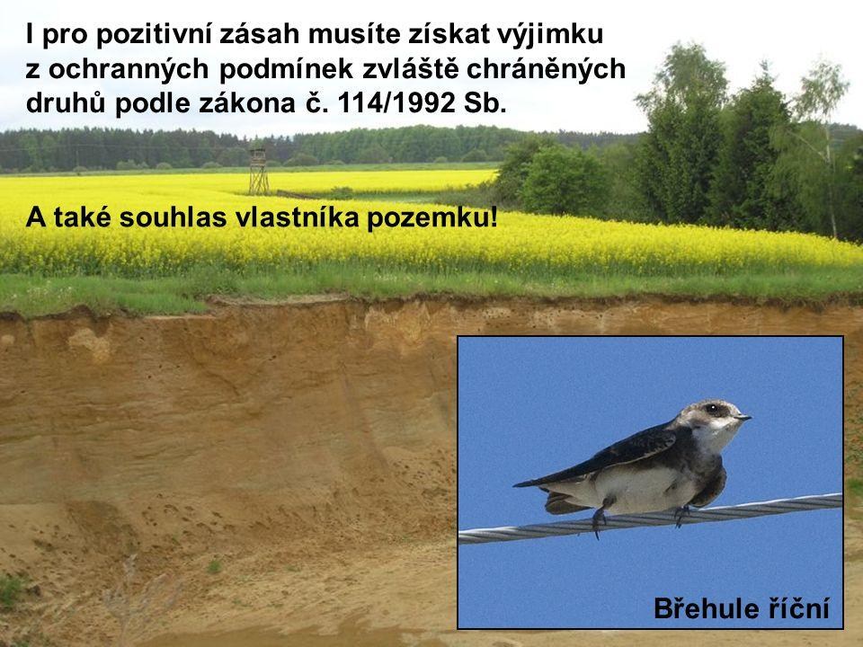 Břehule říční I pro pozitivní zásah musíte získat výjimku z ochranných podmínek zvláště chráněných druhů podle zákona č. 114/1992 Sb. A také souhlas v