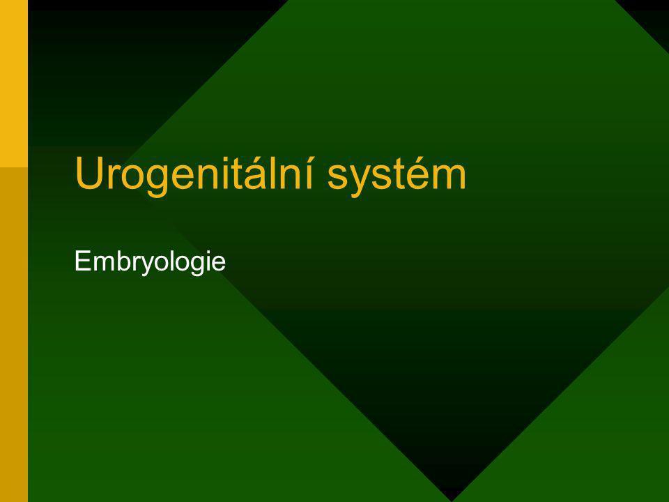 Urogenitální systém Embryologie