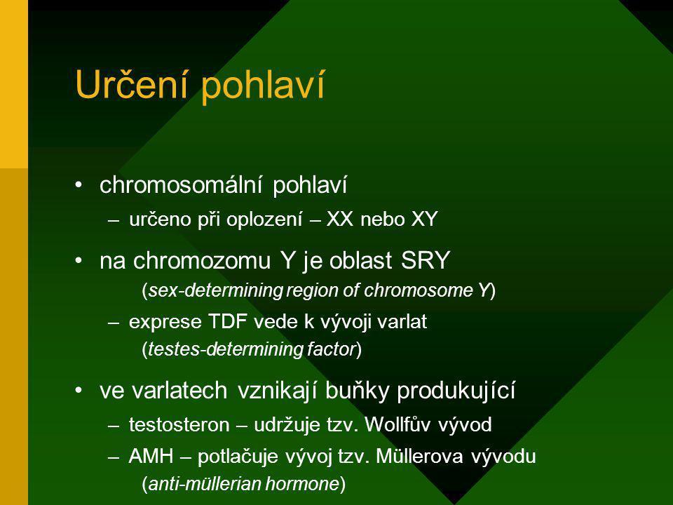 Určení pohlaví chromosomální pohlaví –určeno při oplození – XX nebo XY na chromozomu Y je oblast SRY (sex-determining region of chromosome Y) –exprese