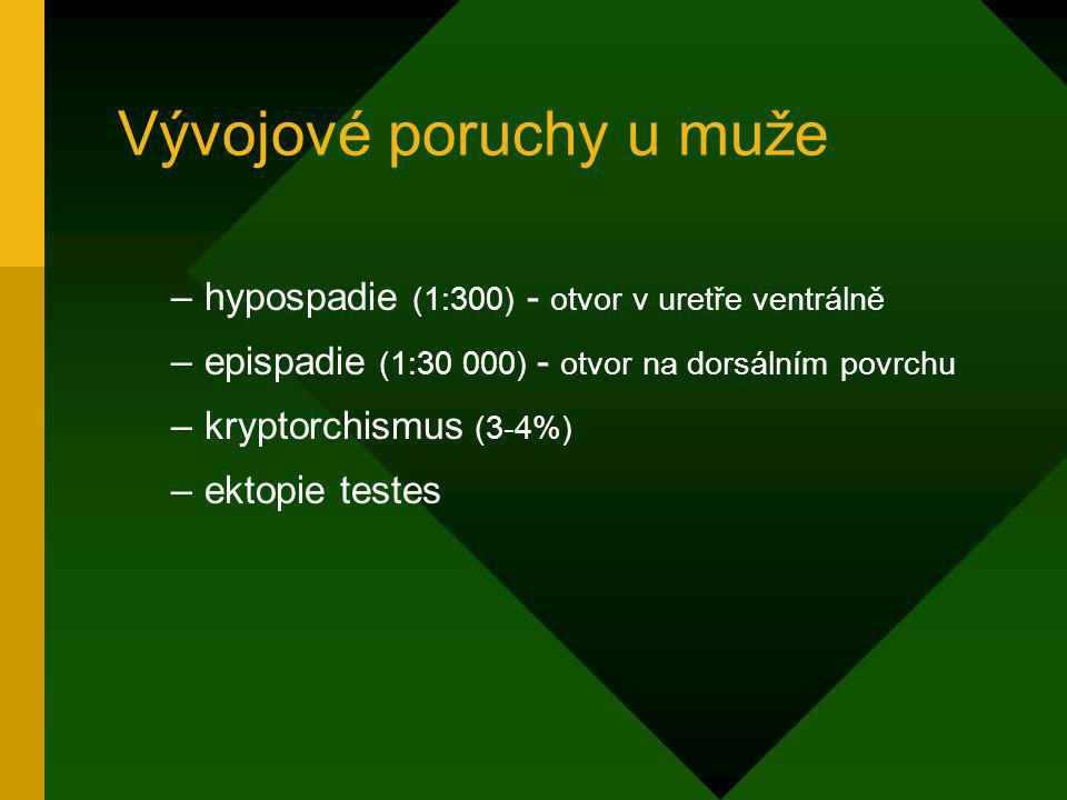 Vývojové poruchy u muže –hypospadie (1:300) - otvor v uretře ventrálně –epispadie (1:30 000) - otvor na dorsálním povrchu –kryptorchismus (3-4%) –ekto