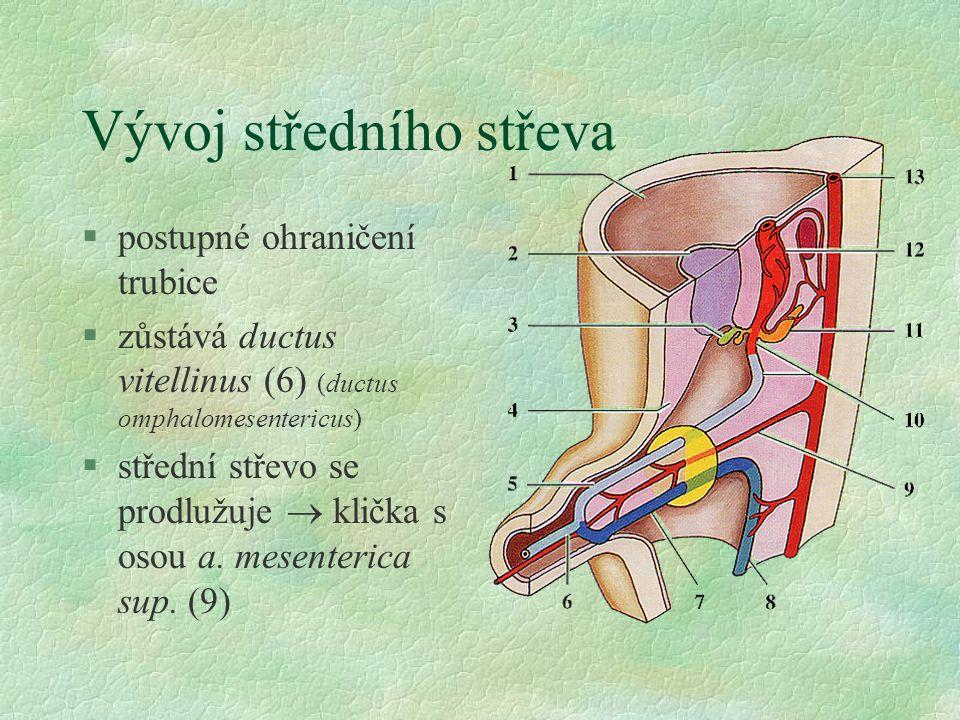 Vývoj středního střeva §postupné ohraničení trubice §zůstává ductus vitellinus (6) (ductus omphalomesentericus) §střední střevo se prodlužuje  klička s osou a.