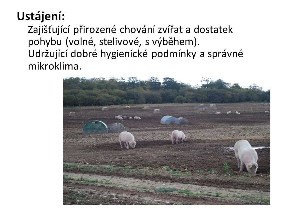 Dodržování zásad welfare: Cílem je vytvořit hospodářským zvířatům podmínky, které odpovídají jejich fyziologickým a etologickým potřebám.