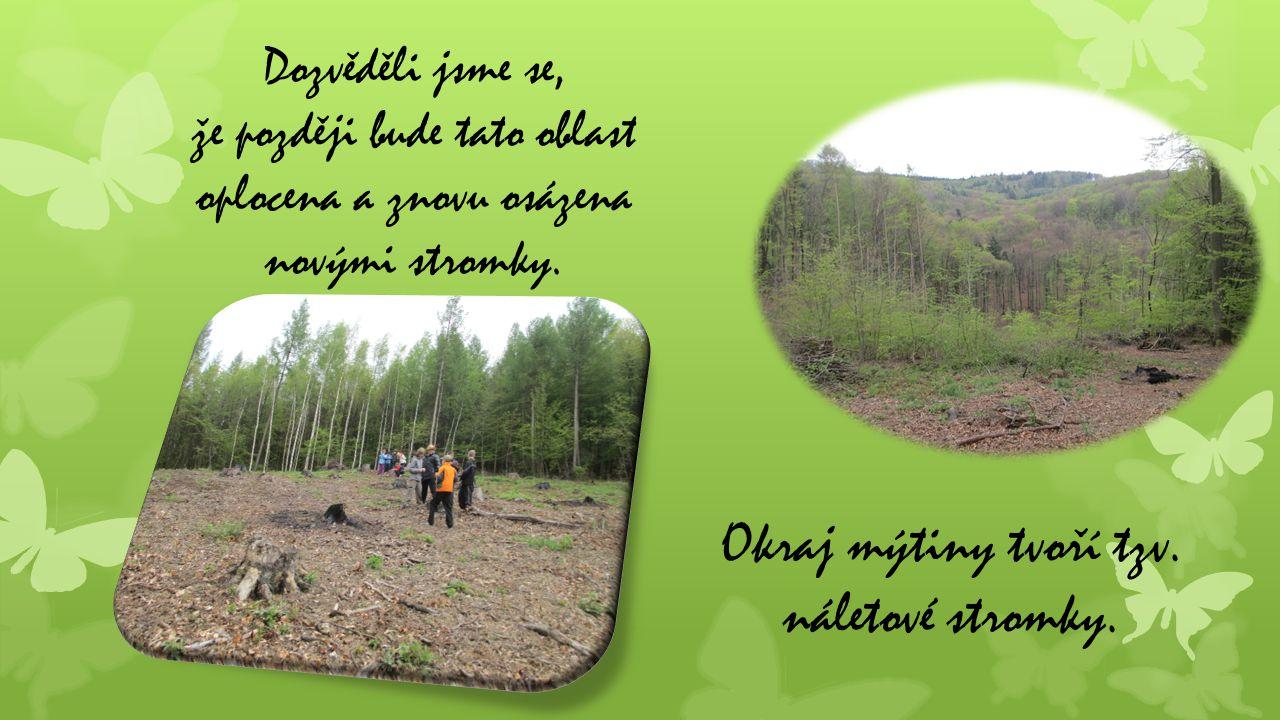 Dozvěděli jsme se, že později bude tato oblast oplocena a znovu osázena novými stromky. Okraj mýtiny tvoří tzv. náletové stromky.