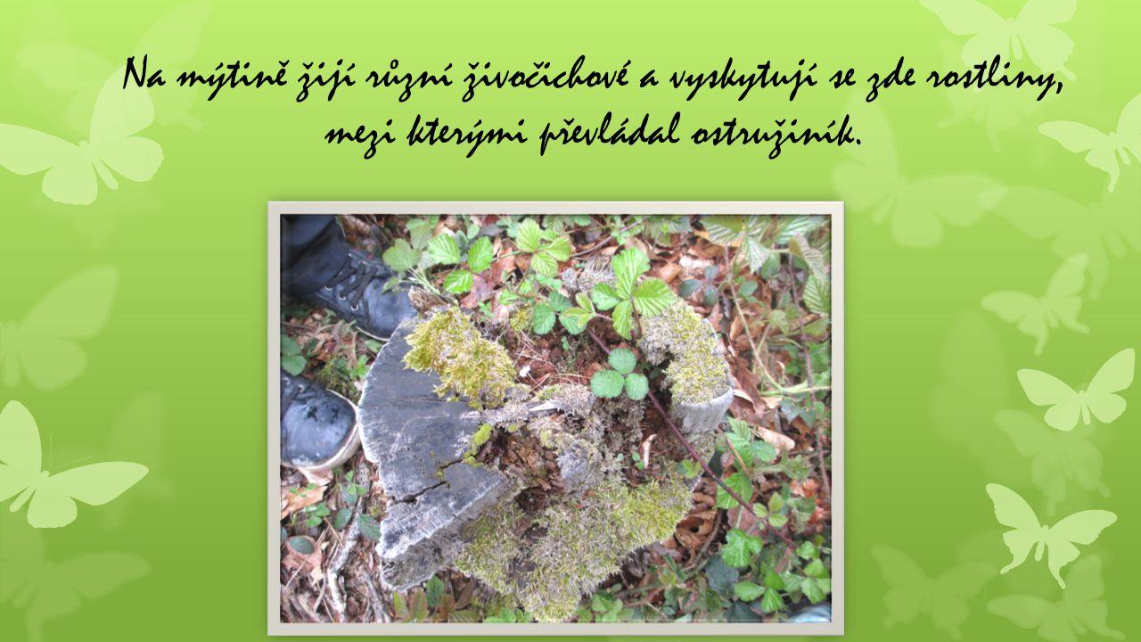 Na mýtině žijí různí živočichové a vyskytují se zde rostliny, mezi kterými převládal ostružiník.