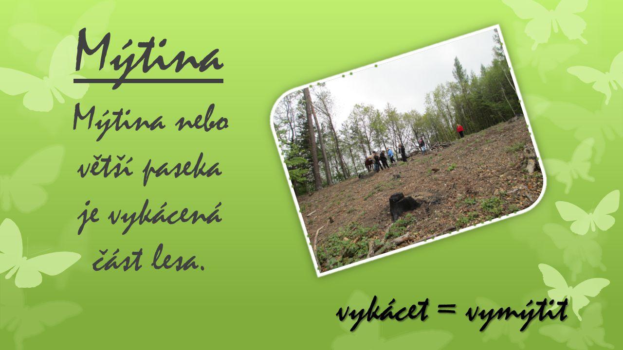 Mýtina Mýtina nebo větší paseka je vykácená část lesa. vykácet = vymýtit
