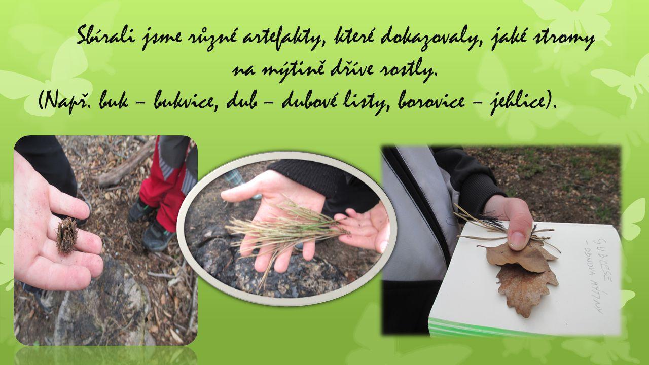 Sbírali jsme různé artefakty, které dokazovaly, jaké stromy na mýtině dříve rostly. (Např. buk – bukvice, dub – dubové listy, borovice – jehlice).